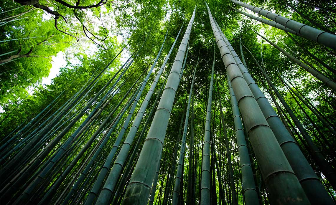 Bamboo | Goodwin Landscape Naples, Florida