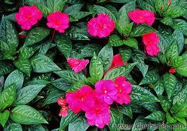 Flowers | Goodwin Landscape Naples, Florida