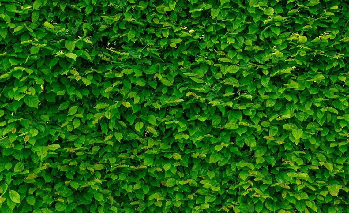 Leaves | Goodwin Landscape Naples, Florida
