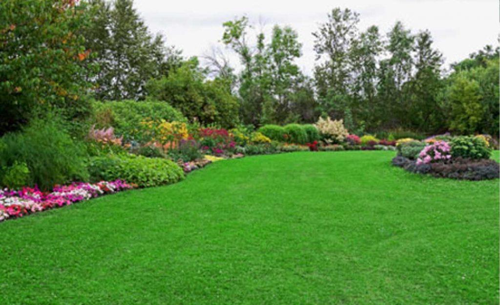 Trimmed Lawn | Goodwin Landscape Naples, Florida