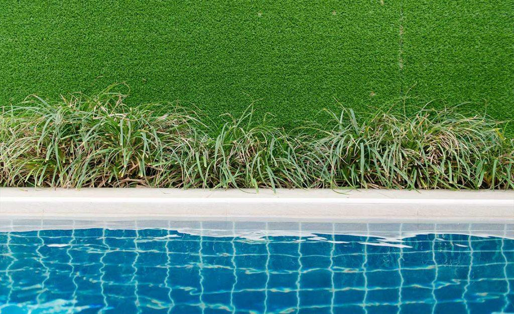 Florida Pool with Shrubs | Goodwin Landscape Naples, Florida